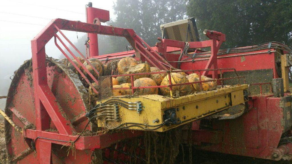 Kürbis-Erntemaschine am Feld